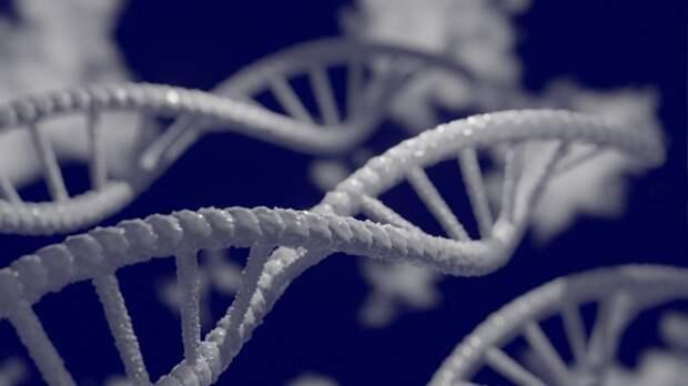 ДНК древнего медведя впервые удалось извлечь из почвы в пещере
