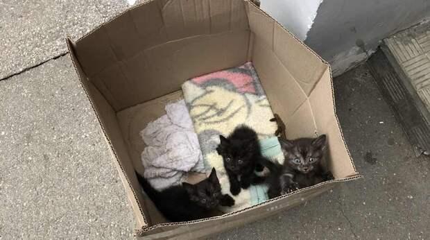 Человек бросил коробку с котятами у подъезда и ушёл. А неравнодушный свидетель уже просил друзей помочь крохам