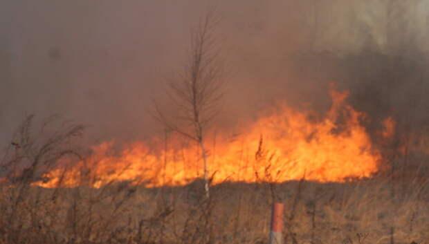 Жителям Подмосковья напомнили об ответственности за поджог сухой травы