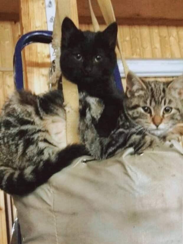 Вот такие славные котомосечки могут стать вашими любимцами!
