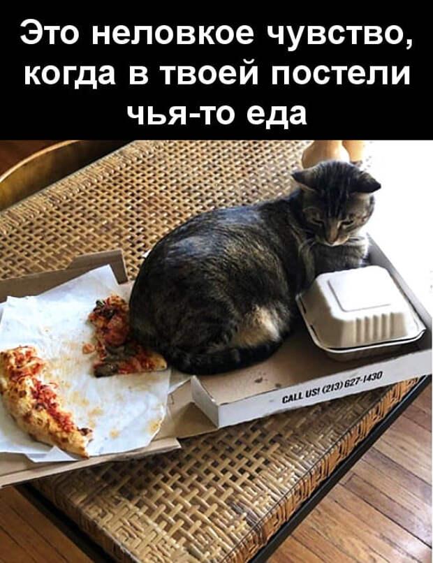Возможно, это изображение (1 человек, кот и текст «это неловкое чувство, когда в твоей постели чья-то еда CALL uS/ (213) 627 627-1430 tta»)