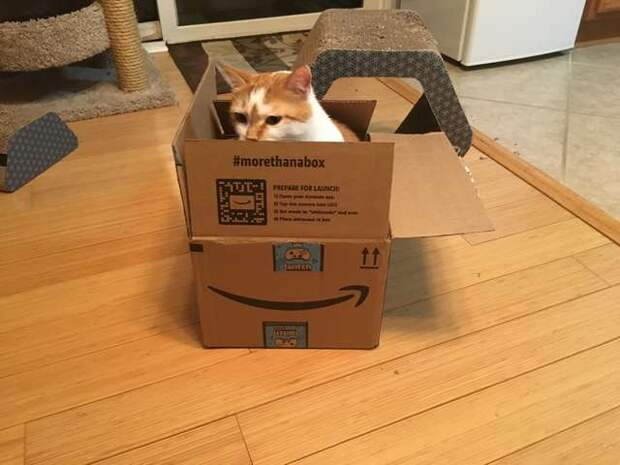 Куча с игрушками слегка зашевелилась и вскоре оттуда показалась морда кота