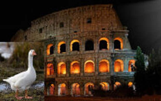 История и археология: Странные причуды Древнего Рима: Почему римляне приносили в жертву собак и почитали гусей