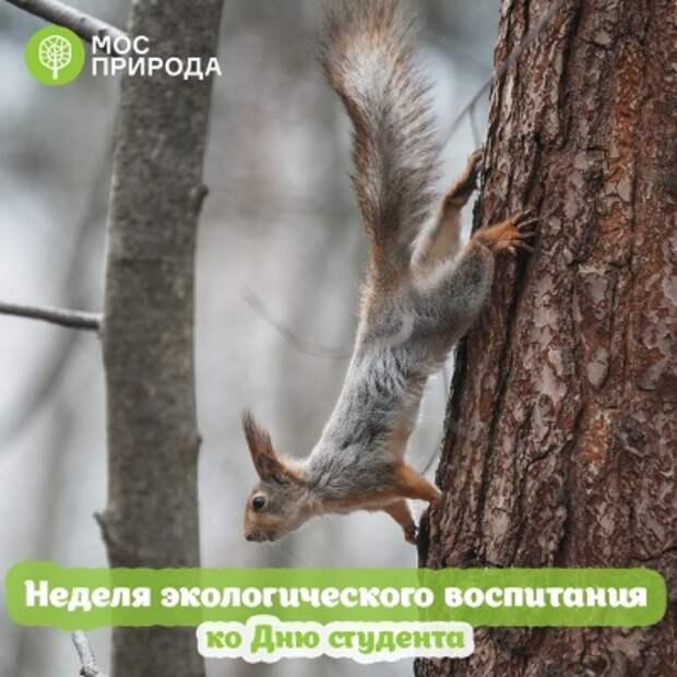В природном парке «Тушинский» пройдёт неделя экологического просвещения