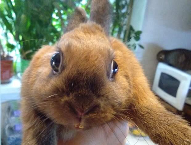Кролик-найдёныш с улицы Верхние Поля оказался личностью