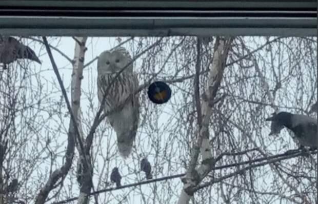 Фото дня: К жителям Арзамаса прилетела сова