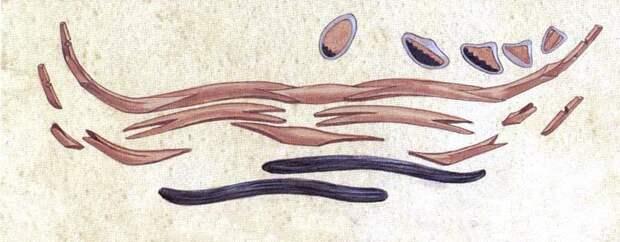 Сложносоставной лук: история и конструкция