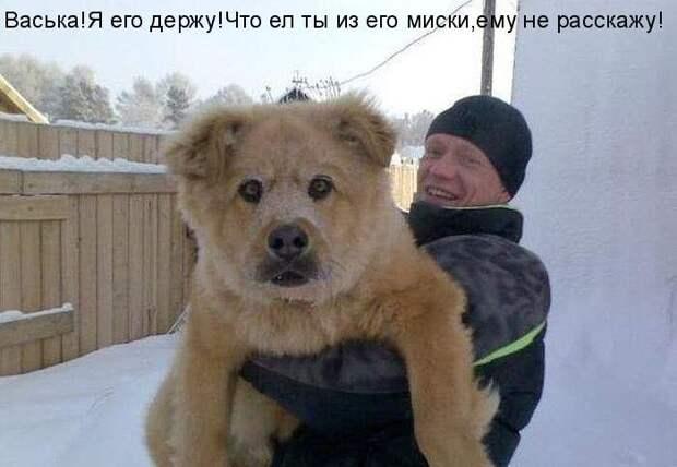 Веселые и забавные приколы с собаками (12 фото)