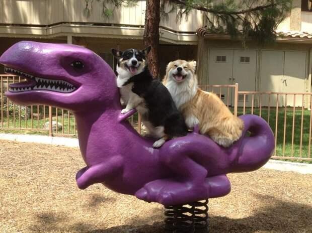Почему бы не покататься на динозавре? животные, смех, снимок