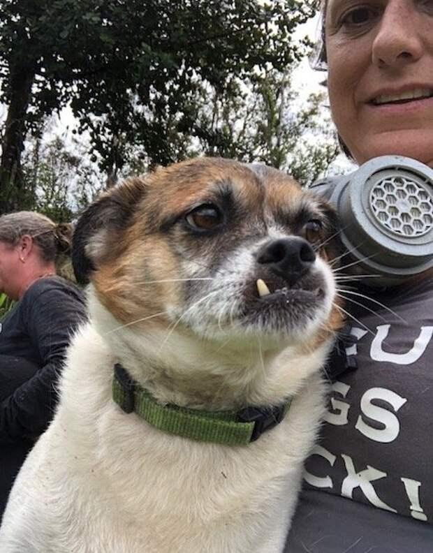 На Гавайях волонтеры спасли двух собак, оказавшихся в ловушке из-за раскаленной лавы