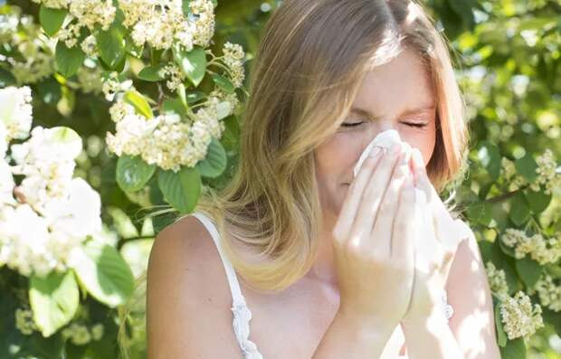 Домашние растения, которые вызывают аллергию