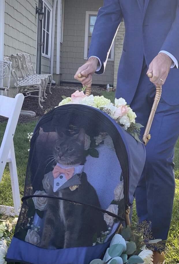 Коту доверили свадебные кольца и необычный шафер стал героем соцсетей