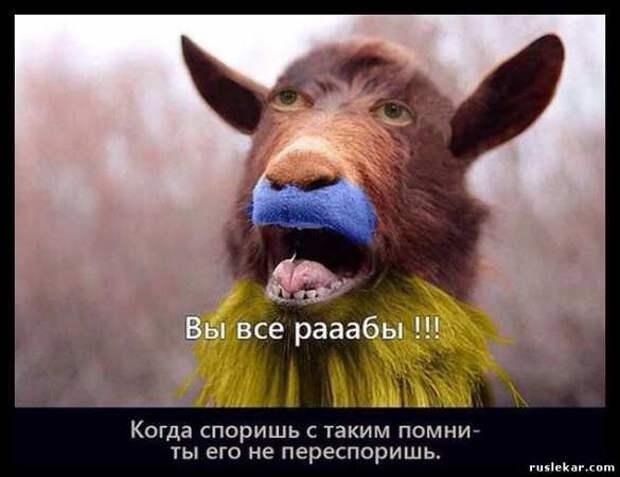 Депутат Рады сравнил граждан Украины с изнасилованными баранами | Русская весна