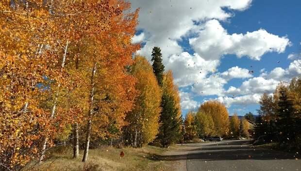 «Желтый» уровень опасности из‑за ветра объявили в Московском регионе на 27 октября
