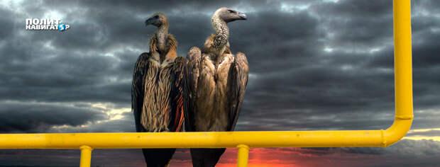США и Германия близки к заключению соглашения по газопроводу «Северный поток- 2», которое предполагает...