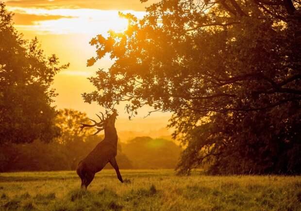 Лучшие фотографии живой природы за последнюю неделю