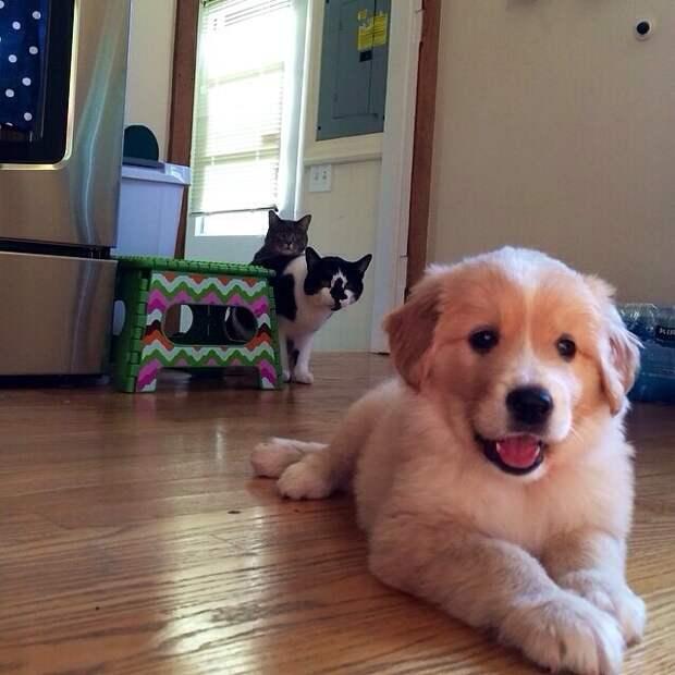 Реакция этих котов на нового щенка в семье подарит вам уйму положительных эмоций