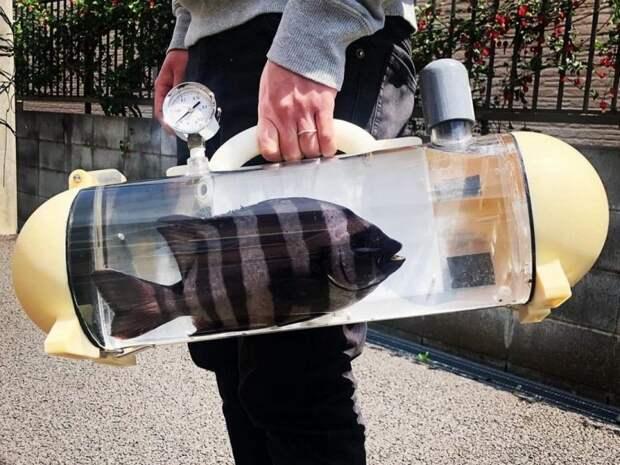 Гуляй, рыбка, большая и маленькая! В Японии создали прозрачную сумку-переноску для живойрыбы