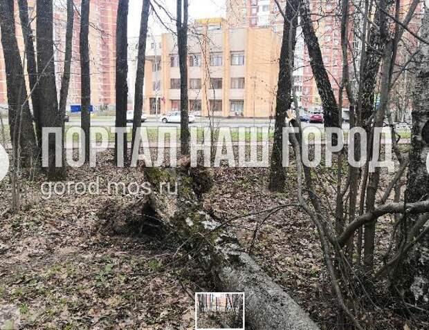 При падении дерева в парке «Зеленый театр» никто не пострадал