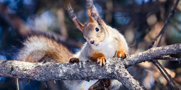 В парках СВАО проводят зимний учёт животных