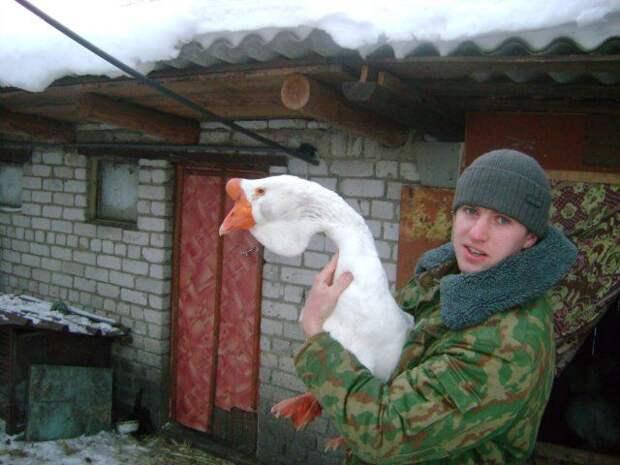 Холмогорские гуси: Запоминающаяся порода русских гусей. Разбираем плюсы и минусы отечественных гигантов