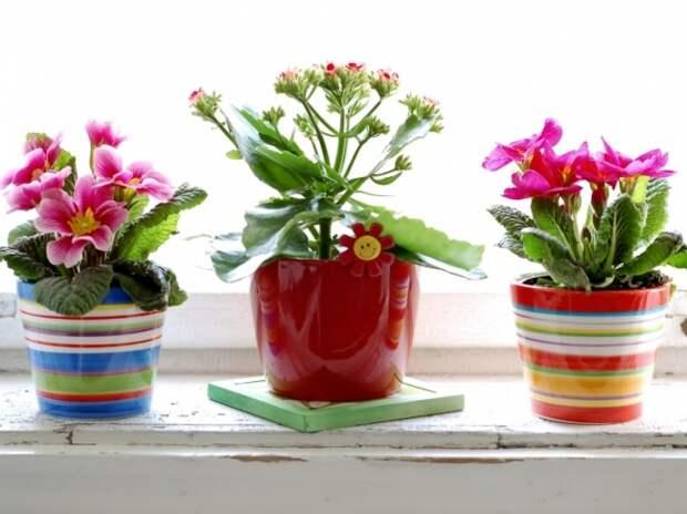 Комнатные растения для здоровья человека