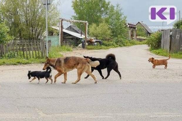 В Коми хозяева собаки возместят 180 тыс. рублей водителю, который наехал на животное