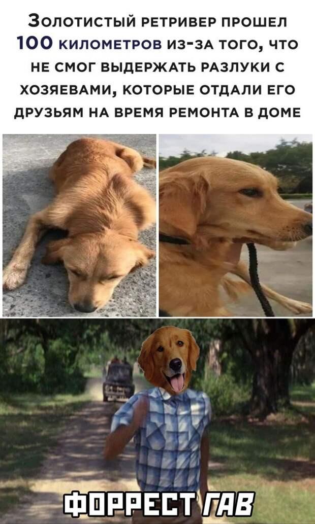 Собака вернулась к хозяину