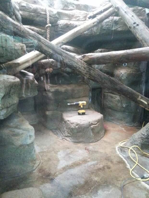 zoopark-zveri-1