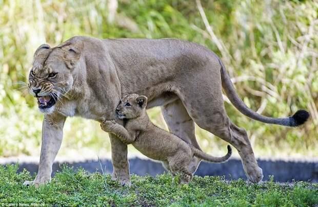 Изумительные фотографии природы, которые вас удивят