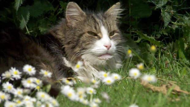 Ученые обнаружили сходство геномов человека и кота