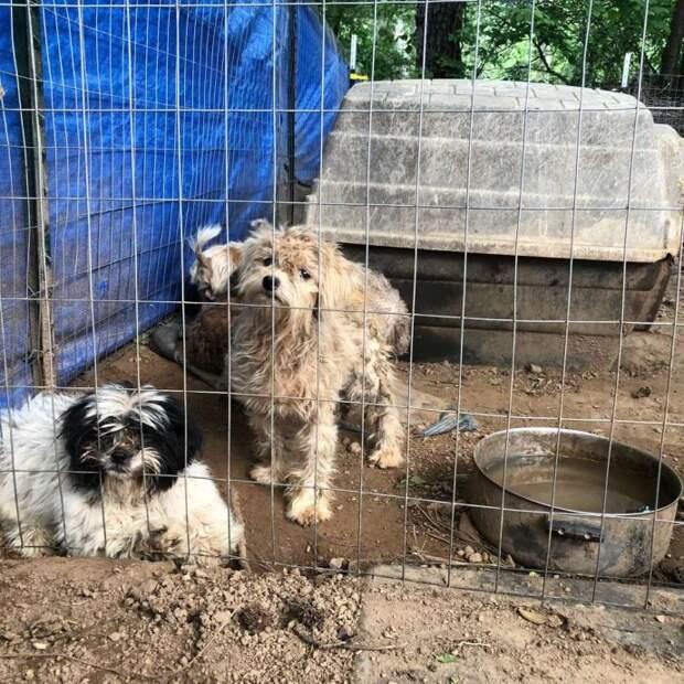 Этого пёсика нашли в концлагере и показали, как он меняется к лучшему!