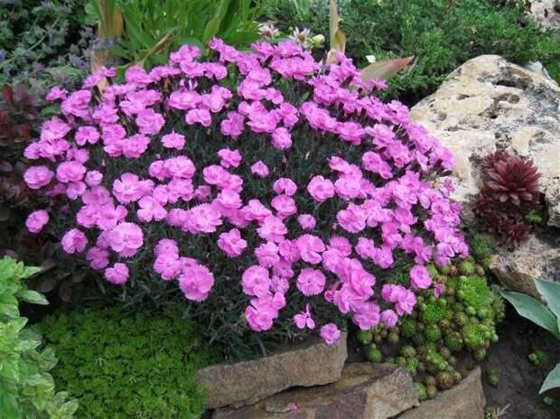 Какие однолетние цветы цветут все лето?