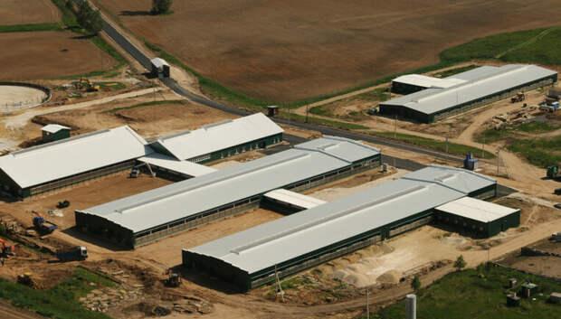 Около 50 предприятий АПК модернизируют в этом году в Подмосковье