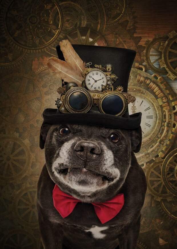 2. Любитель стимпанка Забавные фото, анималист, домашние животные, очеловечивание, портреты животных, собака, собаки, фото собак