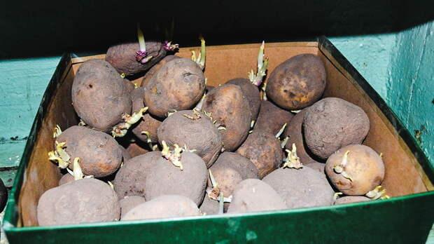 Вянваре вРостовской области подскочили цены накартофель, муку ирыбу
