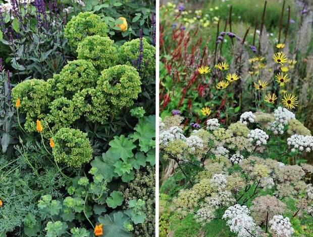 Слева: зеленые цветы. Справа: растения семейства Зонтичные