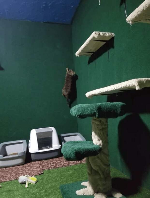 Мужчина переделал подвал в настоящие джунгли для котов погибшего брата