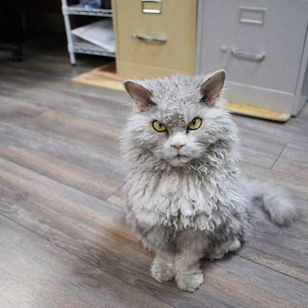 Злой кот Альберт фото