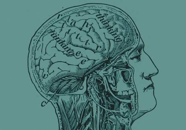 Как работает кнопка Delete в вашем мозге