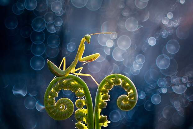 ФОТОВЫСТАВКА. Nordin Seruyan: насекомые и не только