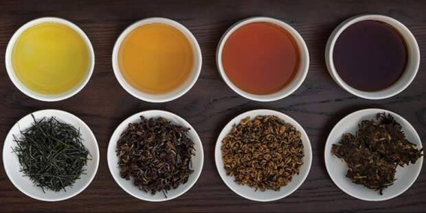 Чем дольше осуществляется ферментация листьев в летний период, тем темнее будет напиток / Фото: vk.com