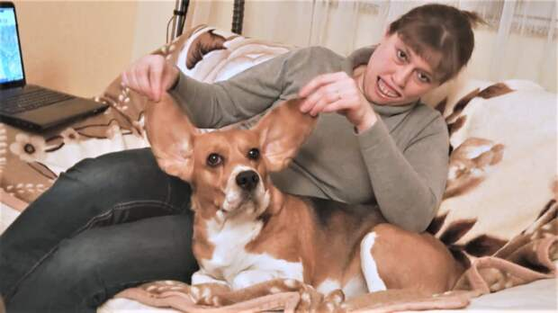 Приколы с собаками Такса знакомится с Ёжиком и Бигль Ушастик