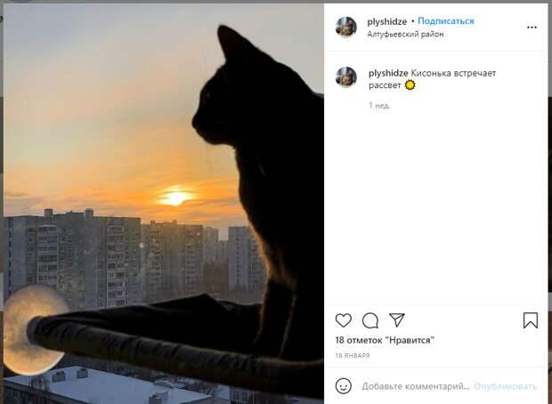 Фото дня: кошка Плюшка из Алтуфьева встретила рассвет