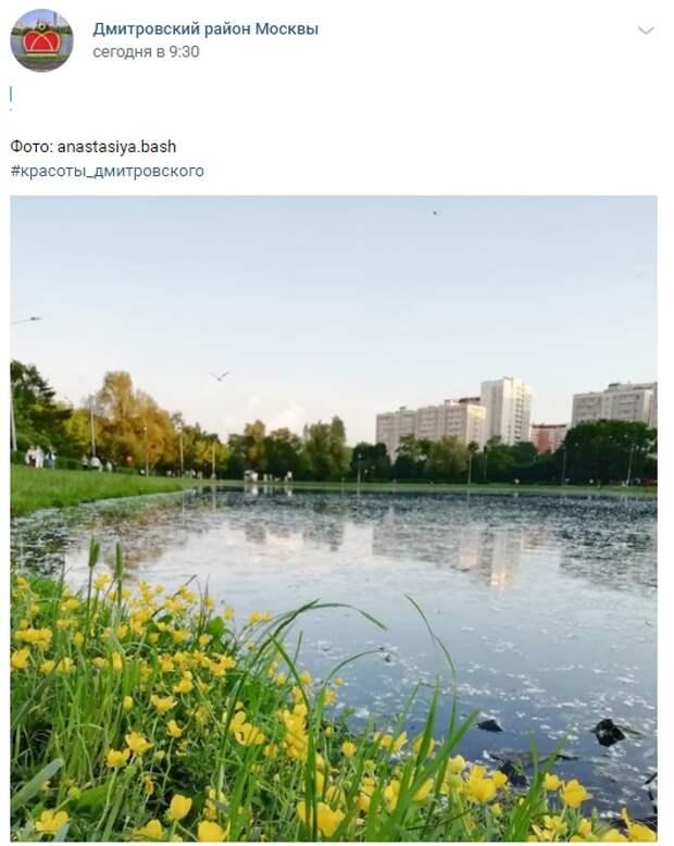 Фото дня: Малый Ангарский пруд и лютики