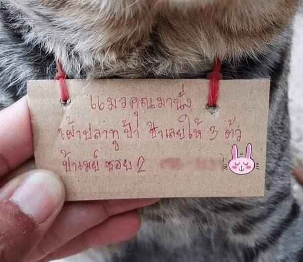 Блудный кот в Таиланде вернулся домой с долгами