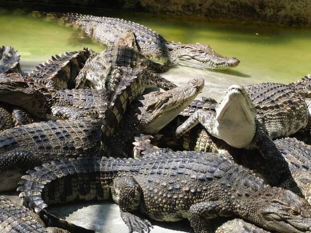 https://360tv.ru/media/uploads/article_images/2018/07/7310_crocodiles-2274545_960_720.jpg