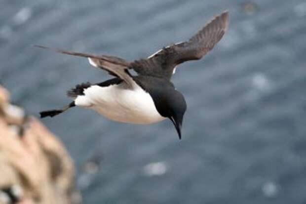 Ученые выяснили, почему в Европе и Америке ежегодно гибнут тысячи птиц