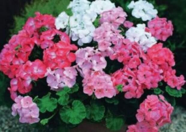 Эти растения защищают от порчи и сглаза