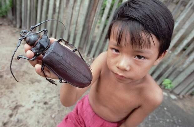 Дровосек-титан. Самый огромный жук размером с ладонь